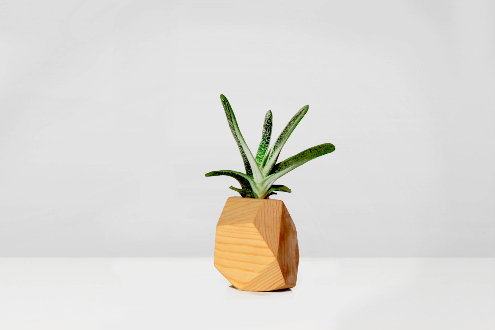 https://www.delapalma.eco/wp-content/uploads/2018/09/geometric-airplant-indiv-small.jpg